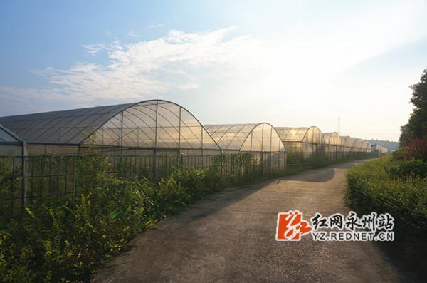 培育桔子苗的大棚。湖南果秀食品有限公司供图.jpg