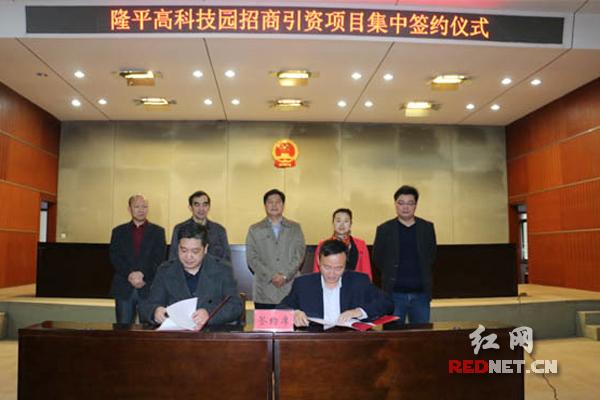 11月16日,隆平高科技园招商引资项目集中签约仪式举行,图为签约现场图。