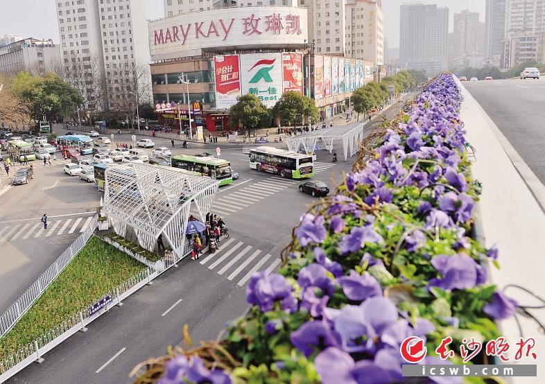 侯家塘广场白色钢架渠化岛上的花草刚刚萌芽,待绿意浓浓时,过马路也成了享受。 长沙晚报记者 邹麟 摄