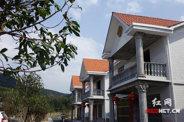 朱家坪自然村新建的洋楼,村庄焕然一新。