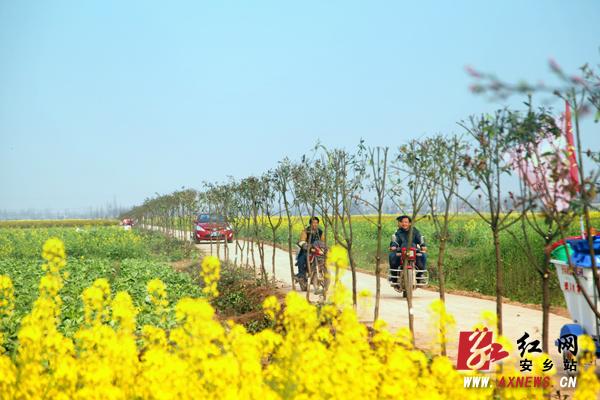 安乡:像植树一样把贫困群众致富奔小康的根栽