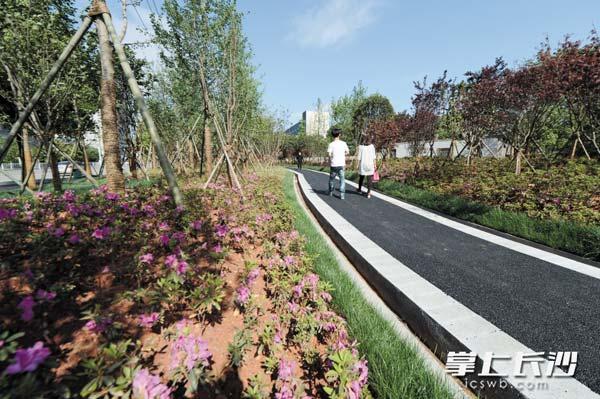 经过提质改造,雀园路靓丽现身。图为沿线绿化带。长沙晚报记者石祯专摄