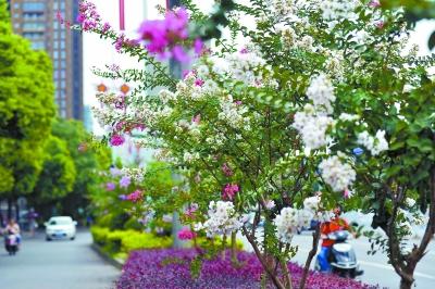 道路两边树木花朵