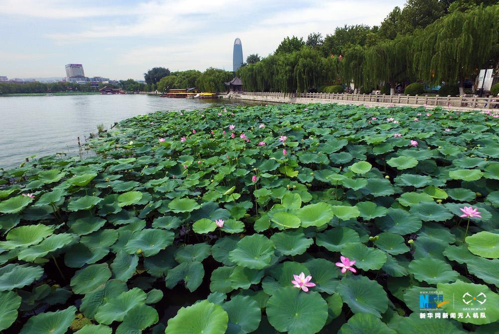 """图为航拍的济南大明湖,""""四面荷花三面柳,一城山色半城湖""""的景象浮现眼"""