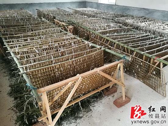 湖南省蚕桑科学研究所实验示范基地在攸县挂牌成立