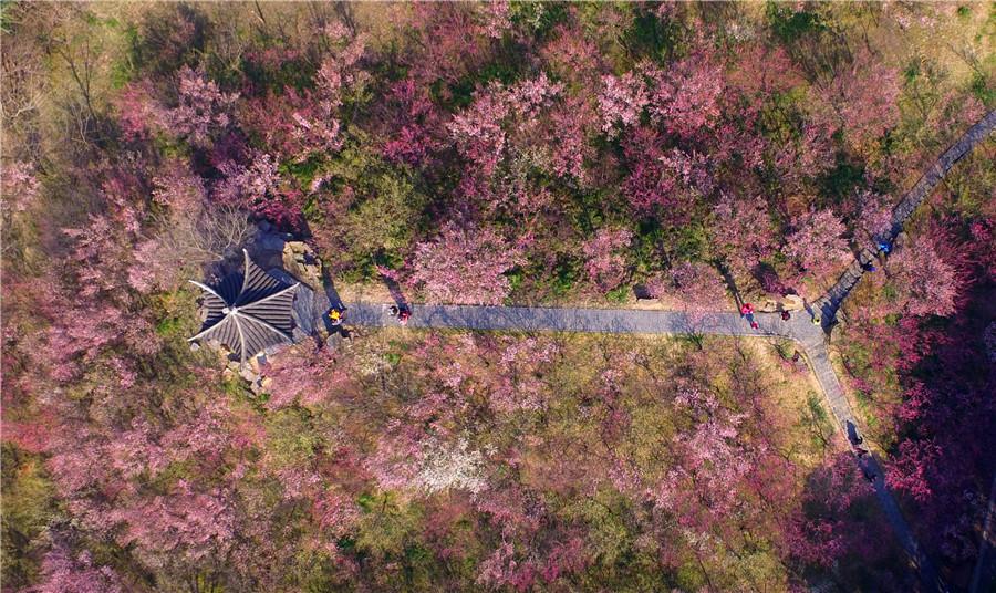 Plum blossoms seen across China