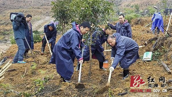 炎陵县开展植树造林活动