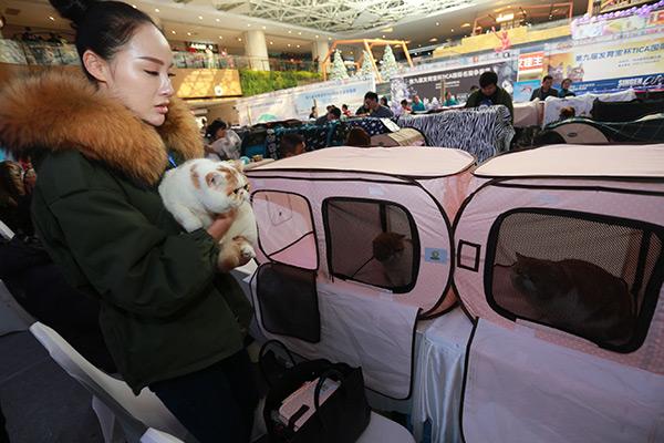 Cross-border zone for pet foods to help meet buoyant demand