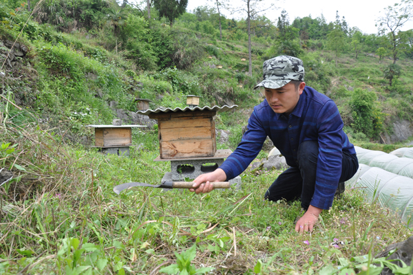 Beekeeping has village buzzing