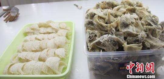 毛燕(右)与成品燕窝(左)比较。林永传 摄