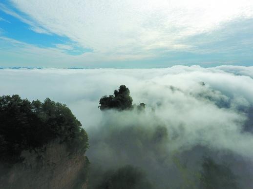 8月9日,雨过天晴的张家界武陵源风景区迎来云海景观.