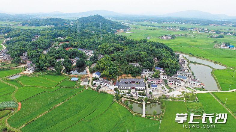 昨日上午,宁乡县资福镇合星村,经过村民生产自救,田野中绿意葱茏,生机勃勃。