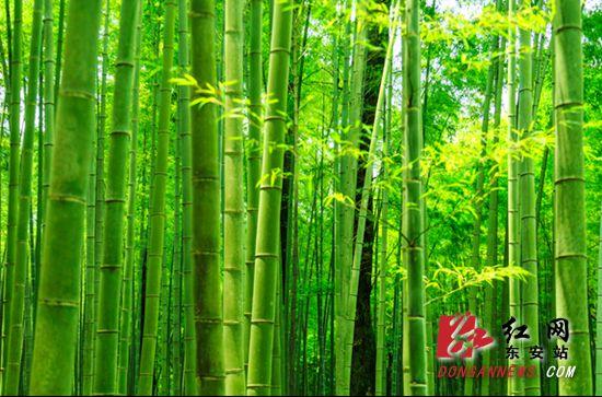 东安竹产业大发展