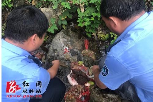 双牌多部门联合行动查获并放生大量野生动物