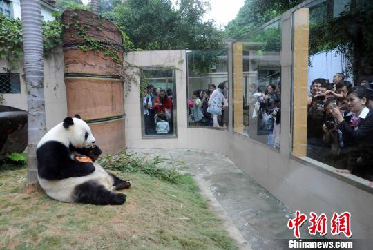 """大熊猫""""巴斯""""辞世传奇一生见证中美友谊两岸良缘"""