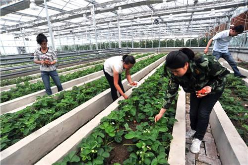 兴十四村现代农业示范园区