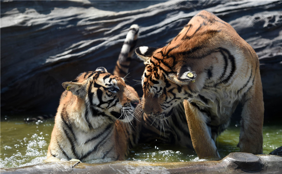2% of land to be used to protect wildlife, pristine areas