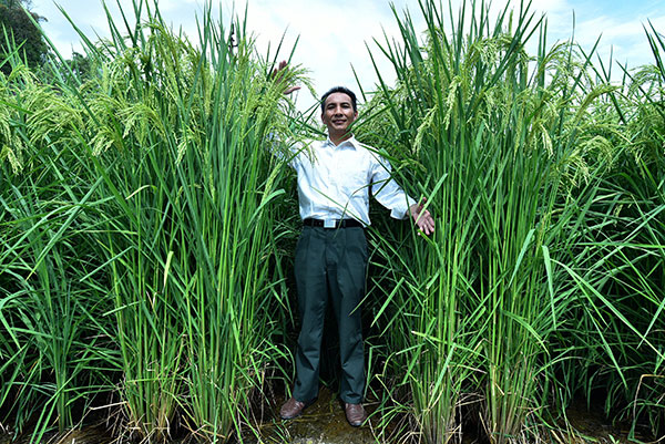 Dedication sees growth of 'super rice' yields