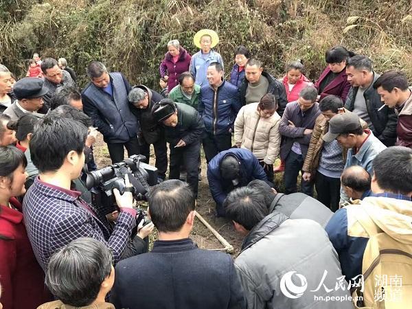 湖南农大沈程文教授指导茶苗种植