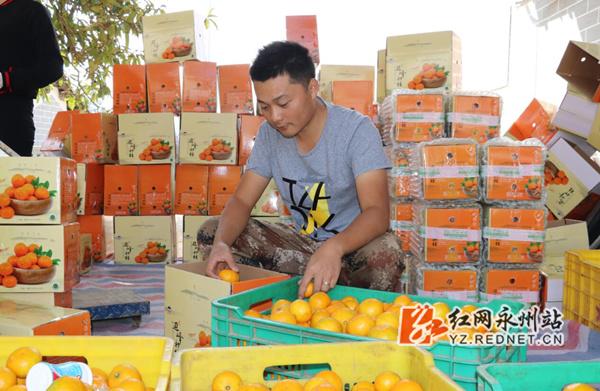 柑橘节助推回龙圩农村电商增收30余万元