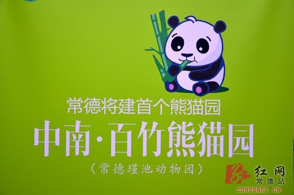 常德首个熊猫主题动物园展示画报.
