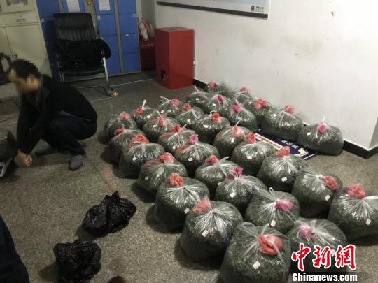 成都海关查获157公斤新型毒品恰特草走私案件
