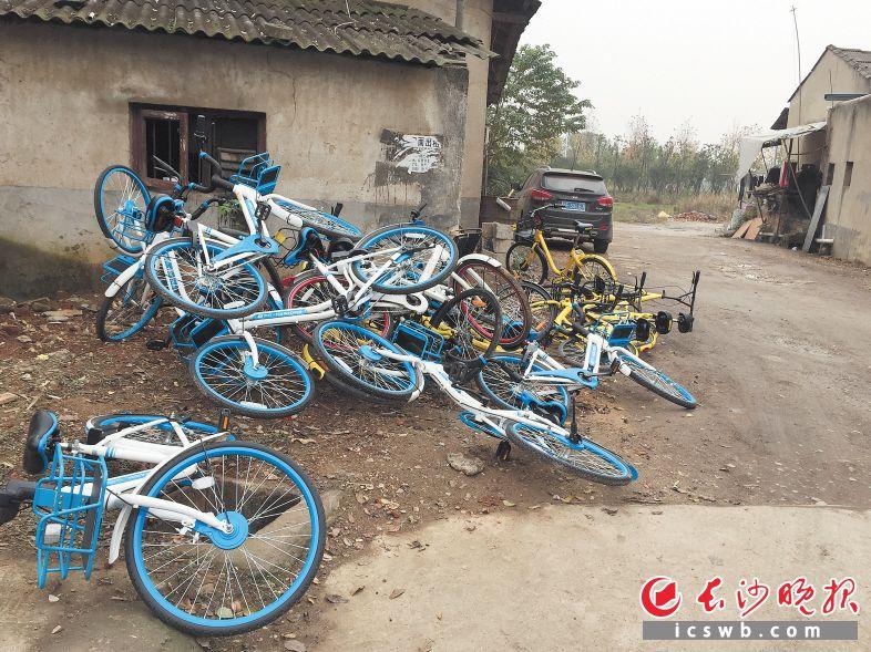 很多共享单车堆放在路边,影响交通,有些共享单车就被汽车压坏了。 长沙晚报记者 谢春年 摄