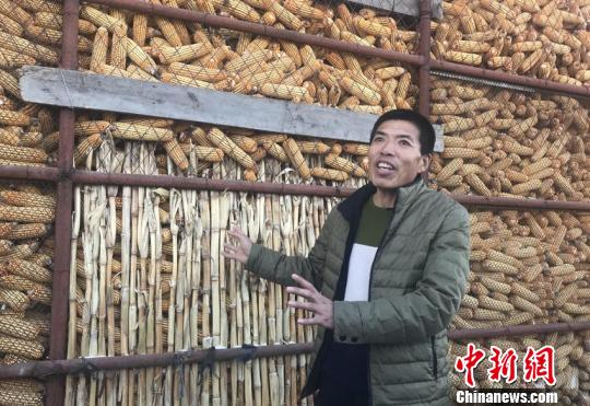 吉林市张相村农民黎克学将几十亩地的玉米储存了起来,他对未来的粮价很有信心。李彦国 摄