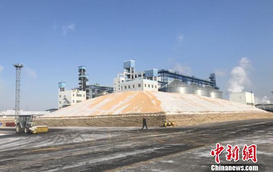 吉林市一粮食深加工企业收购的玉米 李彦国 摄