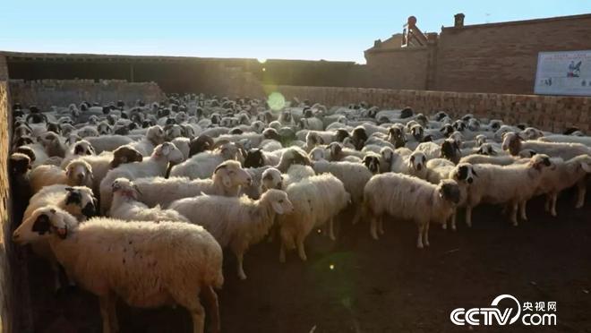 一起见证中国脱贫奇迹 共同实现乡村振兴