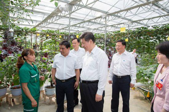 2015年6月16日下午,习近平在遵义县枫香镇花茂村的现代高效农业智能温控大棚,向正在劳动的村民了解增收致富情况。新华社记者 黄敬文摄