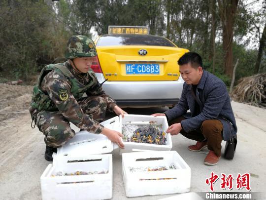 广西崇左边防查获百余只野生活体雏鸟