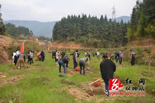 开展义务植树活动 为双牌增添新绿