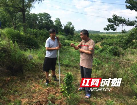 回龙圩:推动产业扶贫,助力贫困户脱贫
