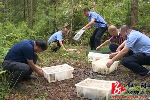 双牌县野外放生一批收缴野生保护动物