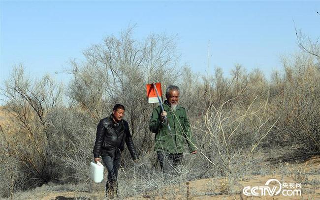 王天昌(右)、王银吉前往沙漠中为一棵干枯的胡杨树浇水。