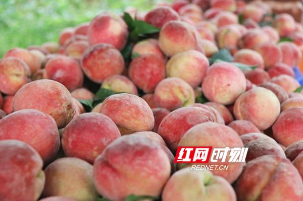 新田骥村:200亩富硒有机桃喜获丰收