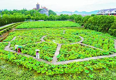 绿色发展是现代农业建设的重大使命