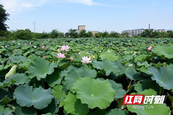"""湘潭市""""灵港公园""""规划出台"""