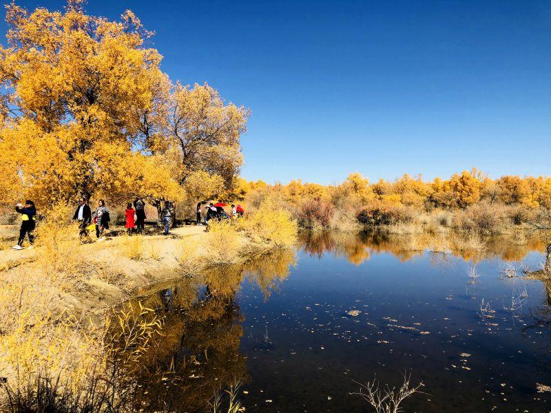 这是10月9日在酒泉市金塔沙漠森林公园拍摄的胡杨林美景.