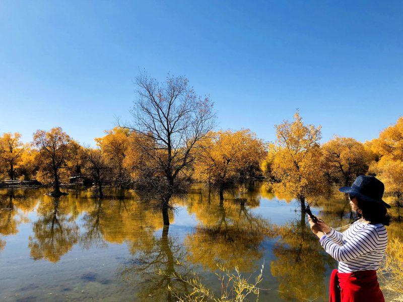 ↑10月9日,游人在酒泉市金塔沙漠森林公园拍摄胡杨林美景。