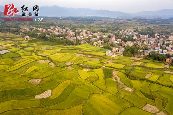 道县:晚稻进入收割时节