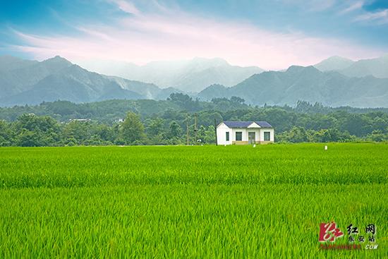 """东安:农业特色产业成脱贫""""金钥匙"""""""