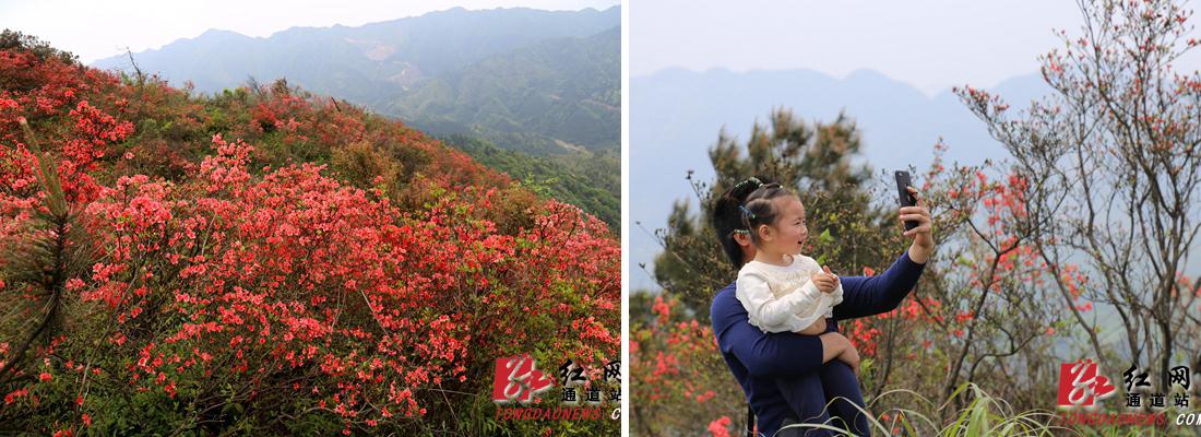 天堂山花开 养在深闺的侗寨热闹起来了