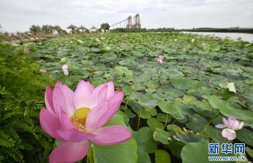 银川市鸣翠湖国家湿地公园一景