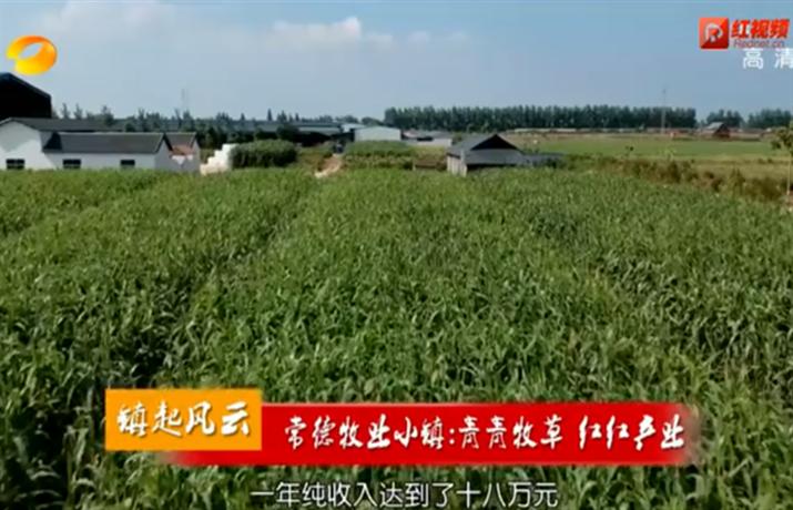 (镇起风云)常德牧业小镇:青青牧草 红红产业