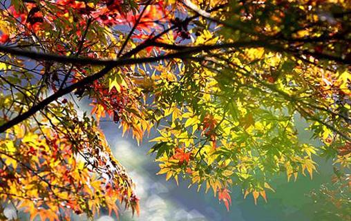 组图 |张家界武陵源:色彩斑斓秋色美